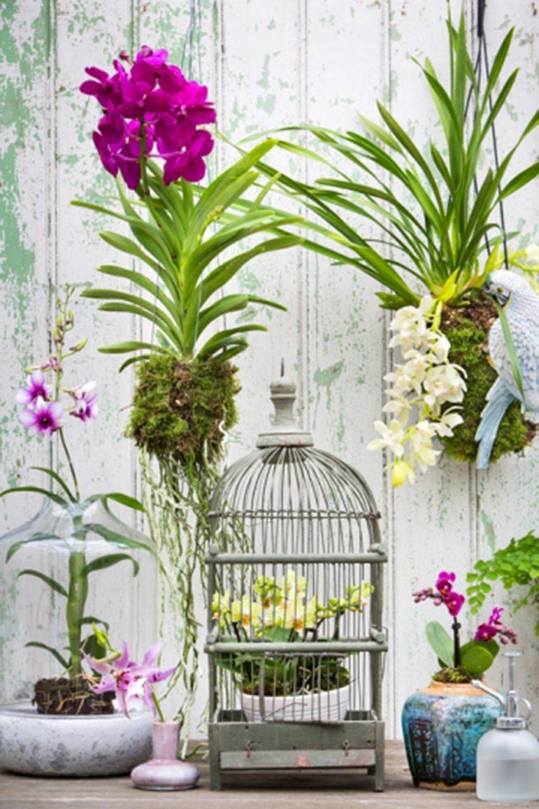 GRS_orchidee_stylingBRU